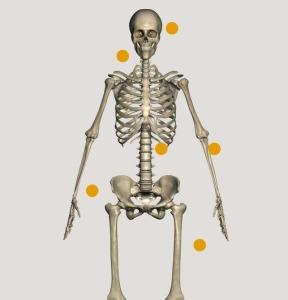 Squelette corpus